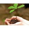 Зелёная Дубрава высадила дубовую рощу в честь своего юбилея
